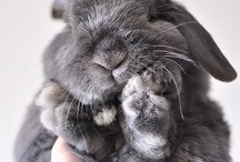 """""""It's so fluffy, I'm gonna die!!!"""" / Love, love, cute and fluffy animals!! / by Jennie Terrell"""