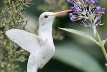 birds / by linda robertson