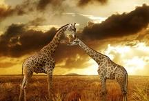 Elephants and Giraffes / by Terry Walker