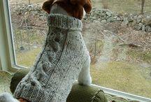 jersey perrito