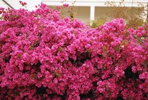 House with flores - IP -