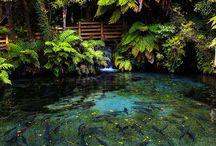 Tropical water gardens