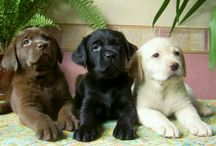 Sweet Puppies / by Jasmine Curtis