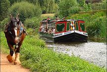 Horses Around the World / Equines around the planet at work and play