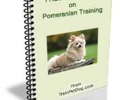 Training Pomeranians