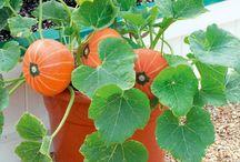 Plants to grow / Fruit and Veggies I plan to grow next season.