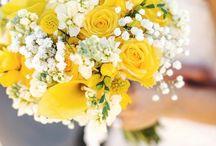 B+V svatba