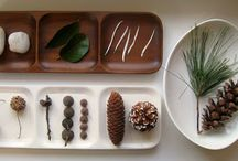 Homeschooling :: Nature Study