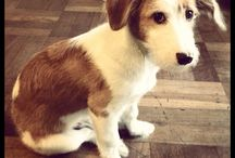 Otro, mi perro / Perrito