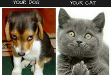 DOG AND CAT HUMOUR