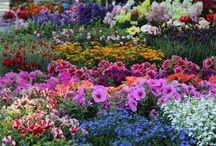 Piante e fiori / Seminare e coltivare piante e fiori