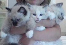 Katter og kattunger