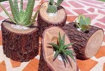 plantas e madeira