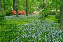 Delaware Gardens / Enjoy the picturesque gardens all throughout the state of Delaware.