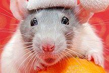 Rat Darling