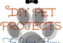Dog DIYs / by Sadie Lankford