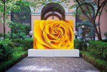 Heart of Rose / Paintings macro