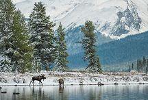 Wild beauty / by Lila Clow