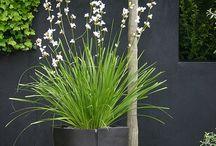 pot / planter