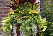 Container Gardening / what flowers, etc., to fill containers with to make them look so beautiful.