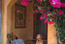 Portas janelas e Flores