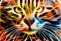 Cool Animals/Animal Stuff / by Cyndy Paulus