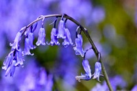 Beautiful Flowers / Beautiful flowers / by Janine Schmidt