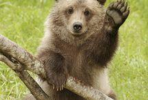 Bears & Pandas