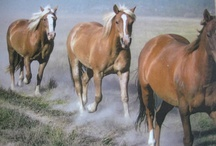 Horseback Riding / Horseback riding on the beach, at the ranch, in the mountains, through rivers, parks and deserts - riding a horse is freedom. Favorite places for horse lovers.