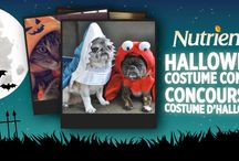 Nutrience Halloween Pet Costume Contest / We're holding a Halloween contest and you could win 1 of 2 Nutrience prize packages for your cat or dog - http://bitly.com/NutriencePetContest