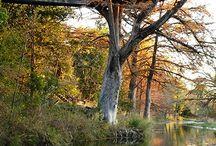 Frio River Treetop