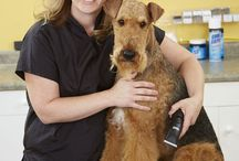 Pets - Airedale Terriers