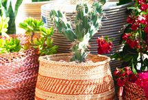 Greenery / plants, indoor plants, office plants, desk plants, plants, plants plants... etc.
