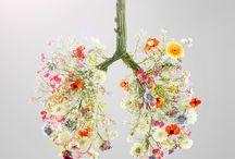 Plicní