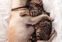Peaceful Animals