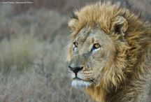 Botswana Safaris / Favourite photos from out on safari in Botswana