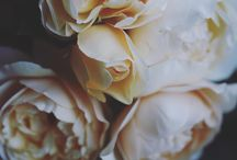 Moody / Evoking mood through imagery, Flowers and photographic styles