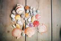 Coquillage - shell / coquillage-shell