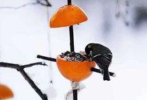Aide oiseaux l'hiver