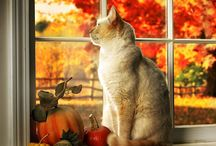Кошки на окошке / Фото наших пушистых друзей на фоне окон
