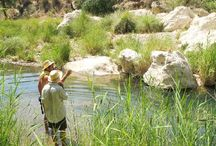 Rio de Aguas / The Rio de Aguas is a unique eco system in danger. The only running river in the Algeria area during the summer it is being drained dry by industrial olive farming. Please help us save it http://www.thepetitionsite.com/takeaction/656/913/404/