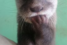 Too cute... Otter's