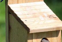 Bird Houses with Birds