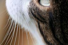 Gatos / Gatos cats neko