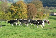 Leben auf dem Bauernhof / Rund um die Landwirtschaft auf einem Grünlandbetrieb mit Milchviehhaltung