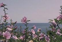 Lilac Mix