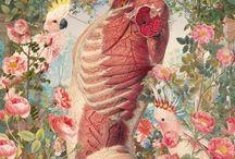 Corps, anatomie