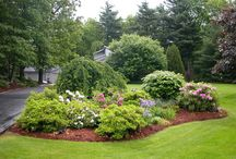 Front yard improvement project / by Anna Fletcher