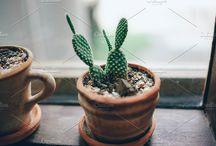 Plants | STOCK PHOTO
