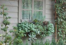 Client Project: Succulent Window Boxes
